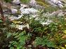 철원 금학산, 고대산의 가을 야생화
