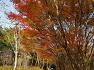 대구수목원에 올해 마지막 단풍 늦가을의 끝자락 만추의 단풍나무,효능,종류.