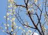[대구 중구 봄꽃소식] 대구 중구 국채보상운동기념공원에 봄의 전령사 다양각색의 매화나무,꽃.효능,전설.