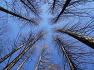 따뜻한 봄기운이 가득한 '청계산 맑은 숲 공원'