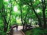 국립산림치유원 마실치유숲길(다스림 데크로드)