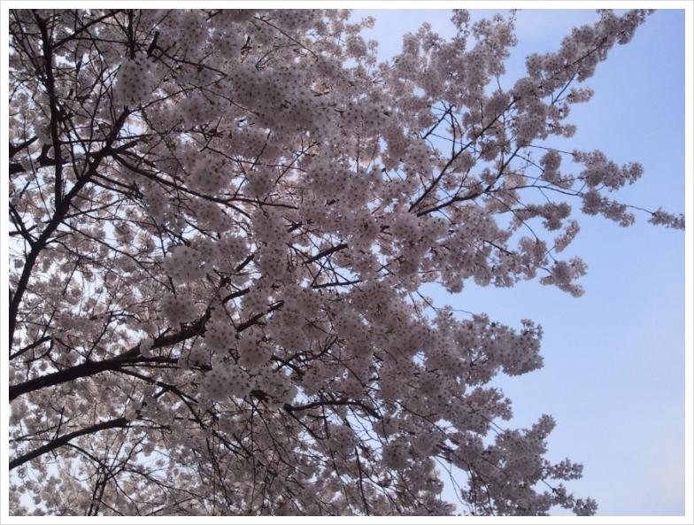 눈부신 봄날