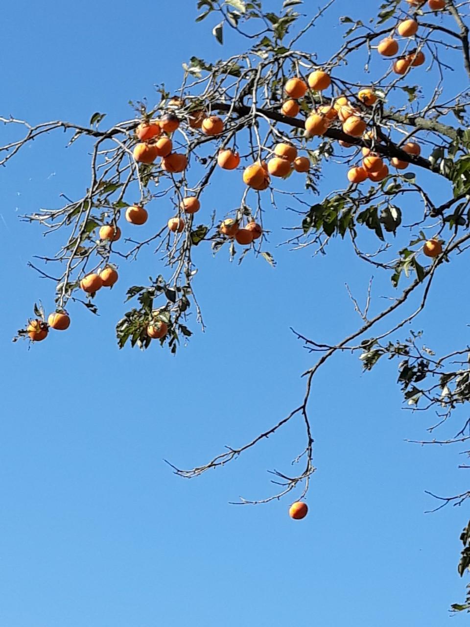 가을 이미지