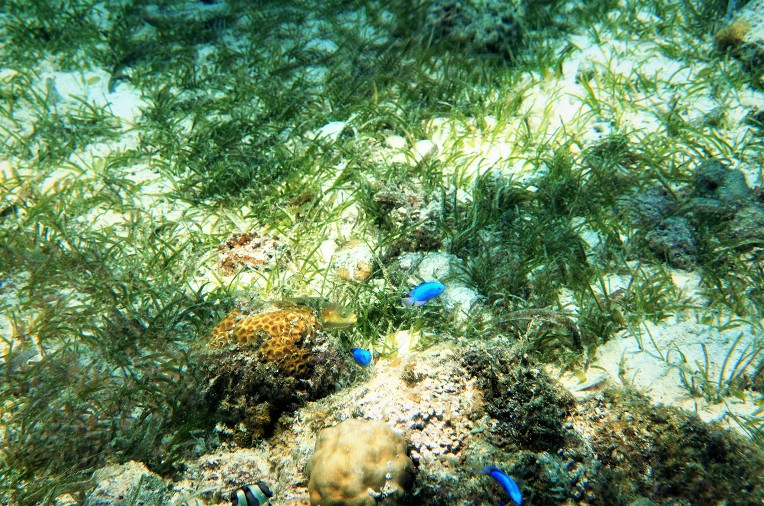Seafroge 방수케이스 와 6500+35mm(1.8) 로 수중촬영(1)